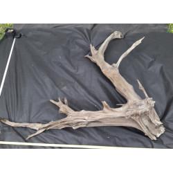 Rašelinový kořen č. 15