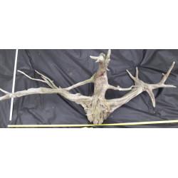 Rašelinový kořen č. 16