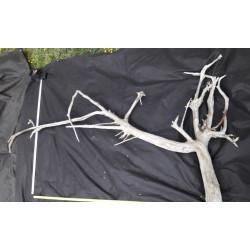 Rašelinový kořen č. 17