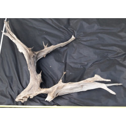 Rašelinový kořen č. 23