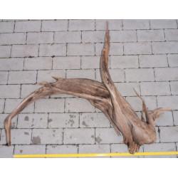Rašelinový kořen č. 24