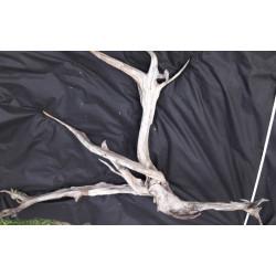 Rašelinový kořen č. 25