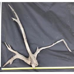 Rašelinový kořen č. 31