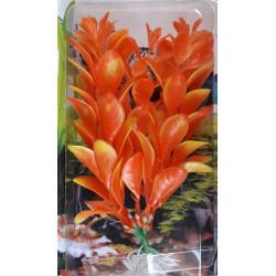Akvarijní rostlina -...