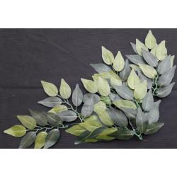 Terarijní rostlina Ficus