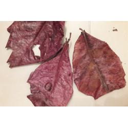 Listy mandlovníku