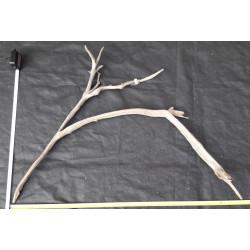 Rašelinový kořen č. 9
