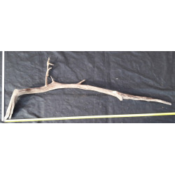Rašelinový kořen č. 39