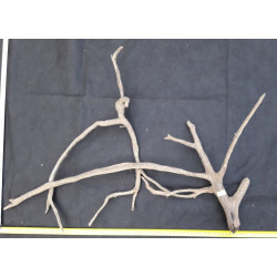 Rašelinový kořen č. 76
