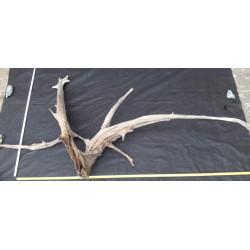 Rašelinový kořen č. 48