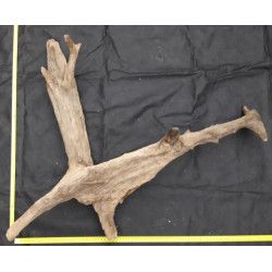 Rašelinový kořen č. 66