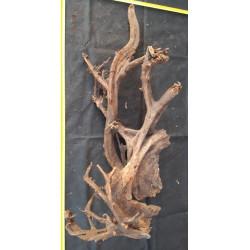 Mangrove velké č. 15