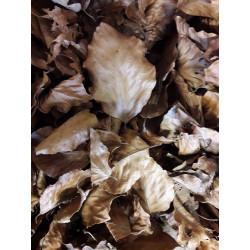 Bukové listy