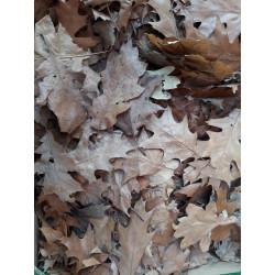 Dubové listy