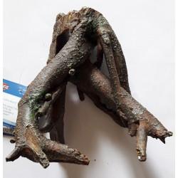 Kořen malý