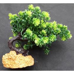 Rostlina bonsai